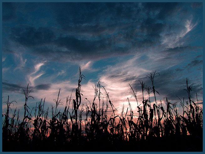 """фото """"Let the Harvest Begin"""" метки: пейзаж, закат, осень"""