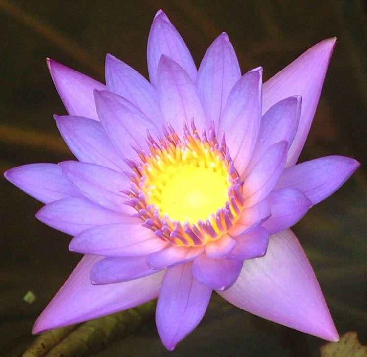 """фото """"Де Жа Вю"""" метки: природа, макро и крупный план, цветы"""
