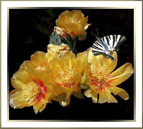 """фото """"Cactus flower"""" метки: природа, цветы"""