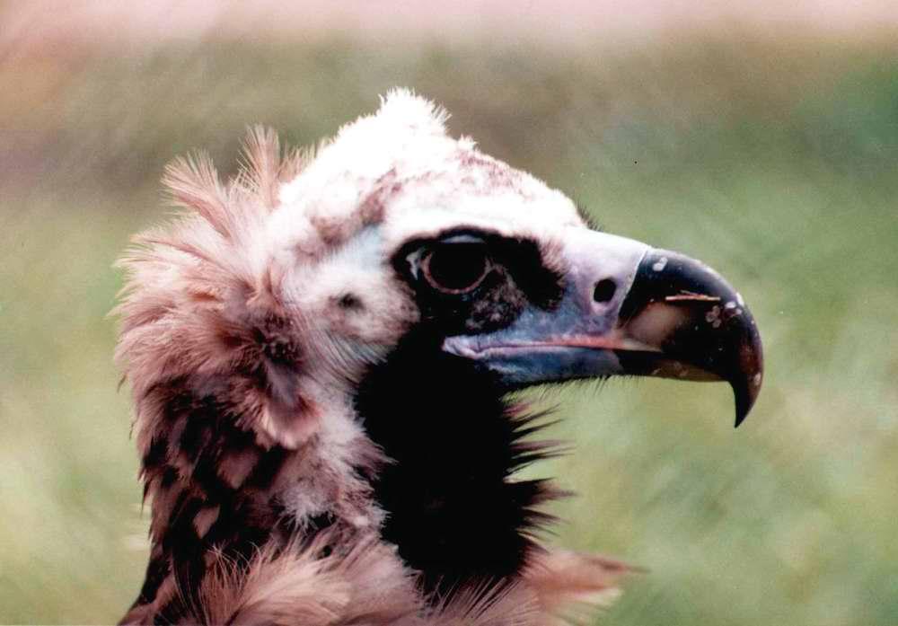"""фото """"птичка"""" метки: природа, портрет, дикие животные"""