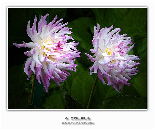 "photo ""A couple"" tags: nature, flowers"