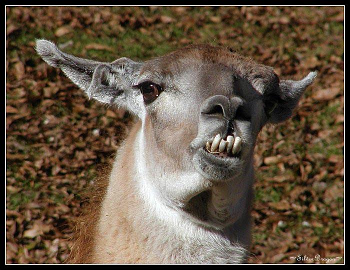 """фото """"You Lookin` At Me?"""" метки: природа, юмор, домашние животные"""
