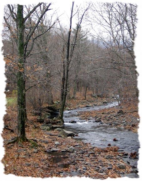 "фото ""Into the Woods"" метки: пейзаж, вода, лес"