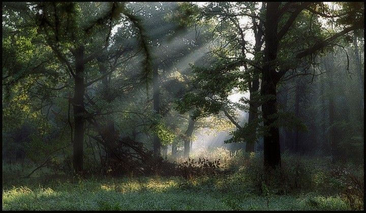 "photo ""Light among trees"" tags: misc., landscape, forest"
