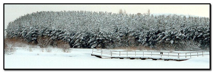 """фото """"Winter"""" метки: пейзаж, зима, лес"""