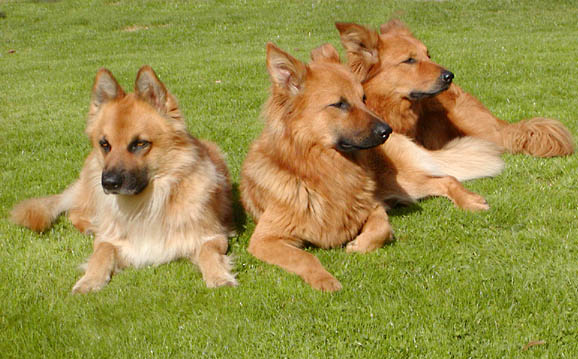 "photo ""My 3 dogs"" tags: nature, pets/farm animals"