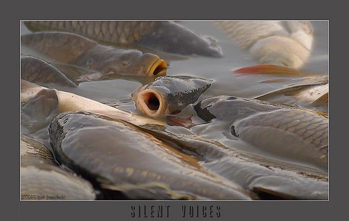 """фото """"Silent Voices"""" метки: разное,"""
