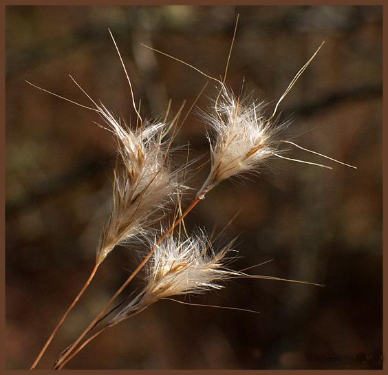 """фото """"Three-Part Harmony"""" метки: природа, макро и крупный план, цветы"""