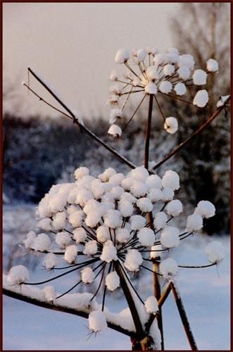 "фото ""Парашют"" метки: природа, цветы"
