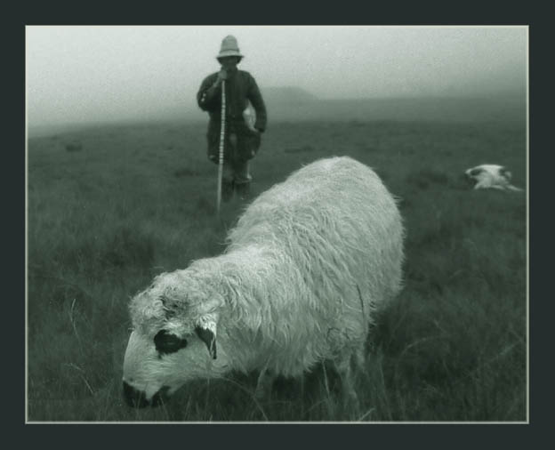 "photo ""Miorita"" tags: nature, pets/farm animals"