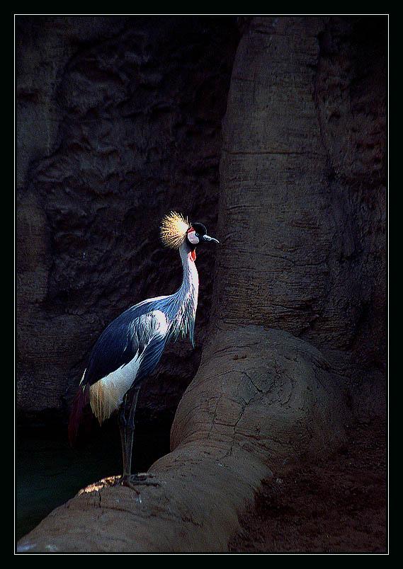 "фото ""Жар-птица"" метки: разное,"