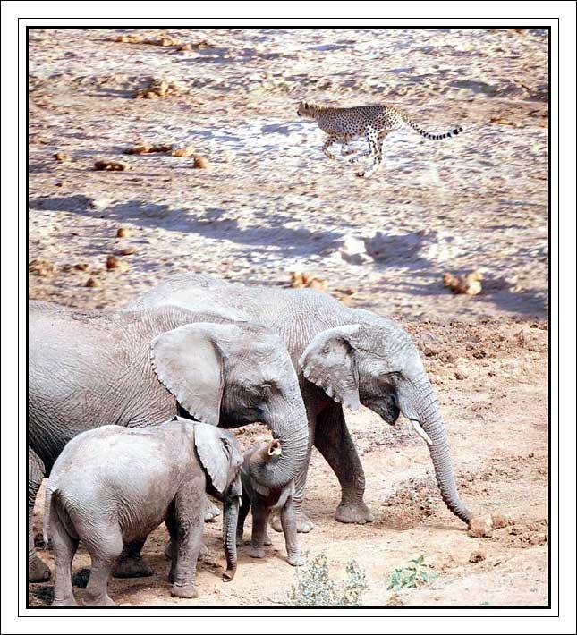 """фото """"On the savanne"""" метки: природа, путешествия, Африка, дикие животные"""