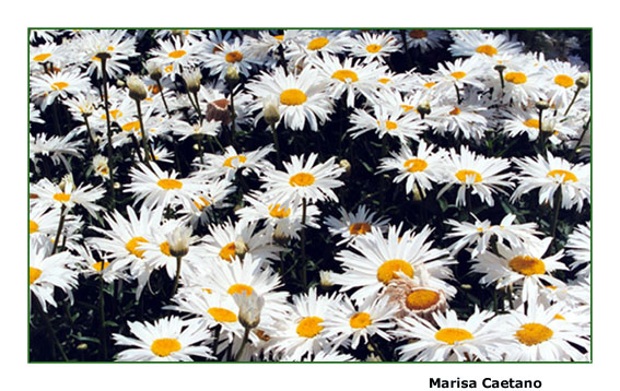 """фото """"Walk among flowers"""" метки: разное,"""