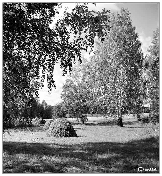 "photo ""Nostalgia on summer"" tags: landscape, forest, summer"