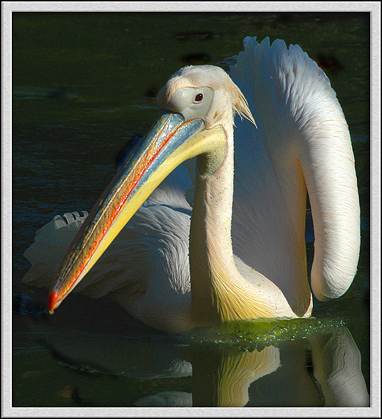 "photo ""*****"" tags: nature, wild animals"