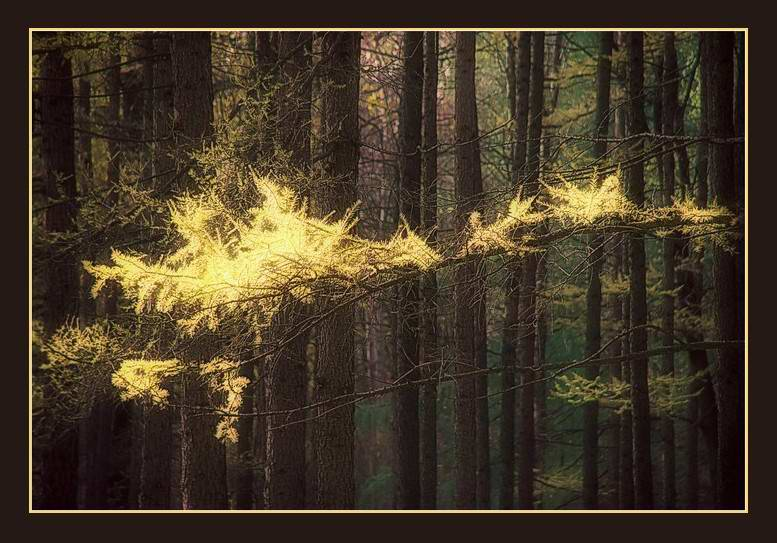 "photo ""Pollen of flown by fairy"" tags: landscape, forest"