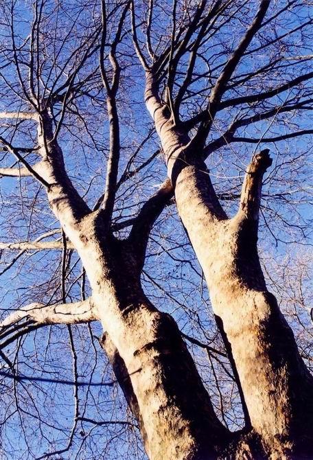 "фото ""towards the blue"" метки: природа, цветы"