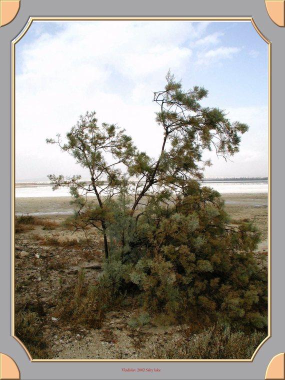 "фото ""На соленом озере"" метки: природа, пейзаж,"