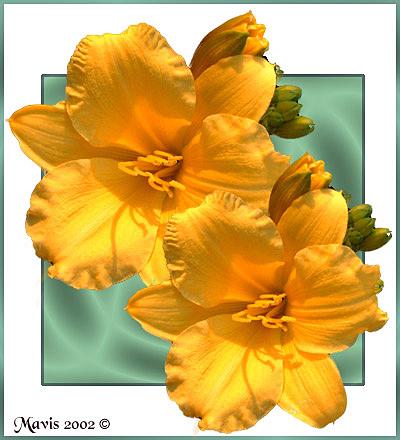 "фото ""Sunshine"" метки: фотомонтаж, природа, цветы"