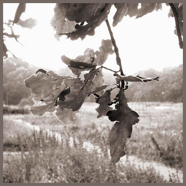 """photo """"oak"""" tags: landscape, nature, flowers, summer"""