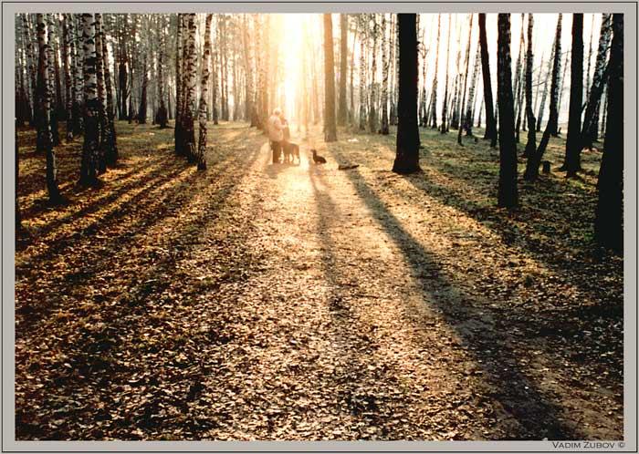 """фото """"Утренняя  прогулка"""" метки: пейзаж, весна, лес"""