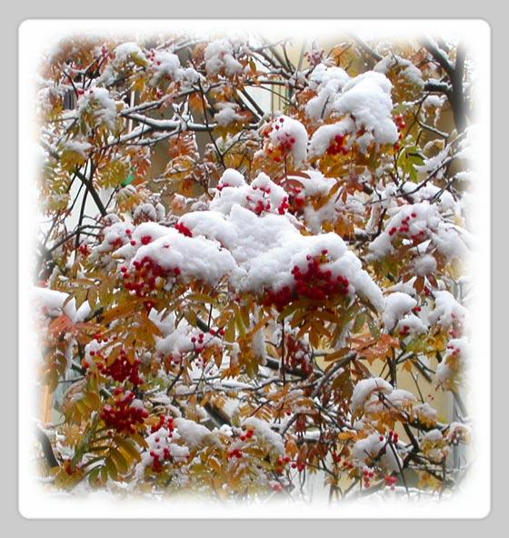 """фото """"Внезапный снег"""" метки: природа, пейзаж, осень, цветы"""