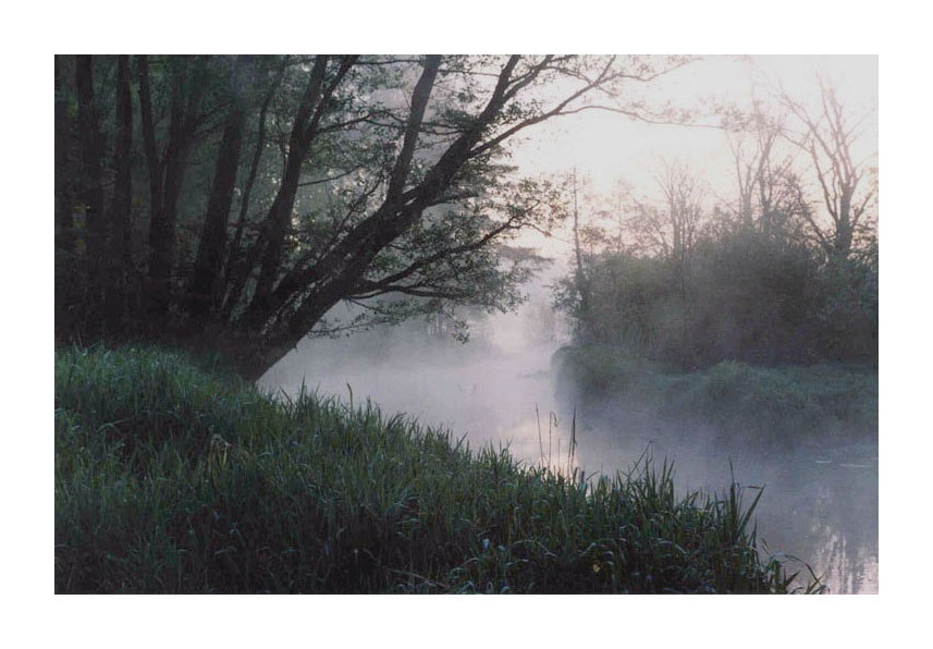 """фото """"Утро в сосновом бору"""" метки: пейзаж, вода, лес"""