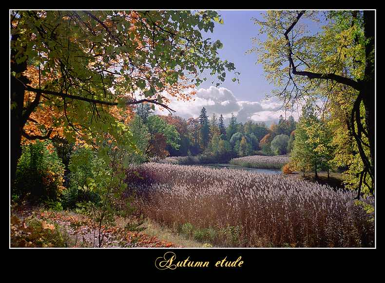 "photo ""Autumn etude"" tags: landscape, forest"