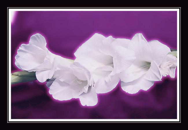 """фото """"Сказка для Надежды(пробная 3)"""" метки: макро и крупный план, природа, цветы"""