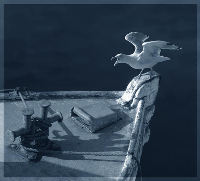 """фото """"An angry sea gull"""" метки: природа, дикие животные"""