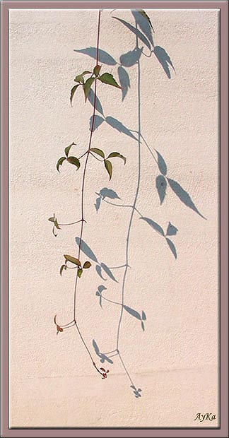"фото ""Nature Morte..."" метки: природа, цветы"
