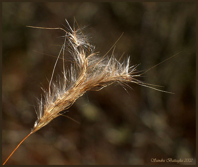 "photo ""Watching for the Wind"" tags: macro and close-up, nature, flowers"
