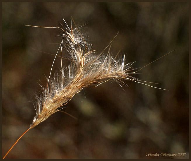 "фото ""Watching for the Wind"" метки: макро и крупный план, природа, цветы"