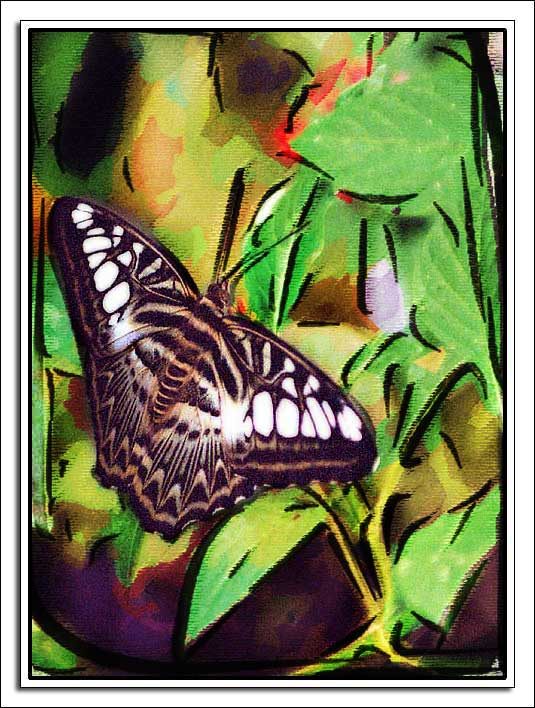 "photo ""Butterfly"" tags: montage, nature, insect"