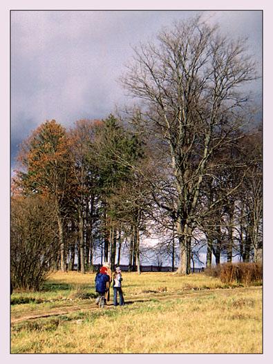 "photo ""autumnal etude"" tags: landscape, nature, autumn"
