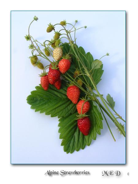 """фото """"October Strawberries"""" метки: макро и крупный план, природа, цветы"""