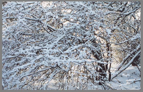 """фото """"Зима"""" метки: природа,"""