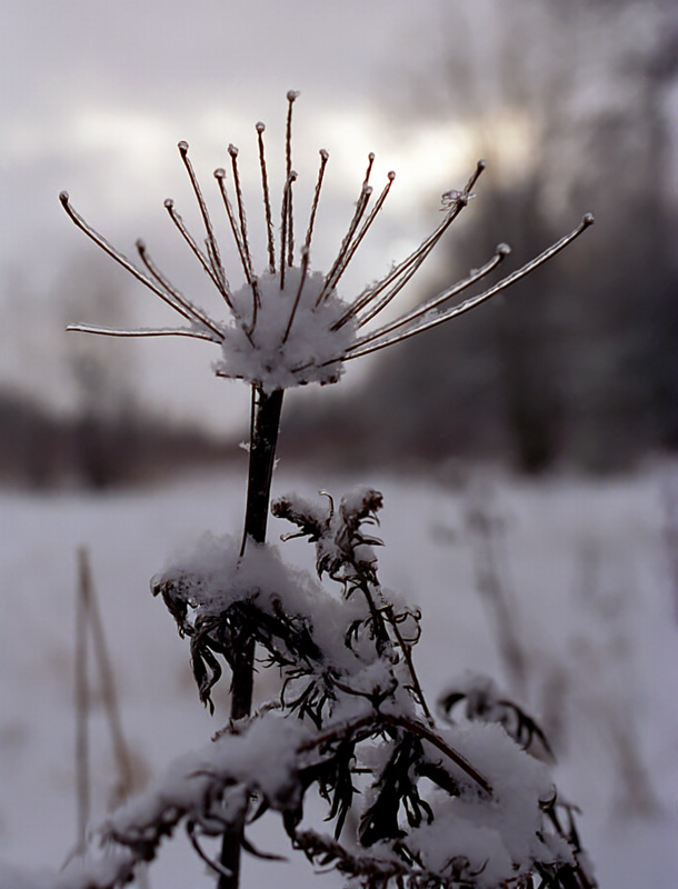 "photo ""Flower of winter"" tags: landscape, nature, flowers, winter"