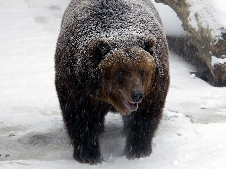 "photo ""bear"" tags: nature, wild animals"