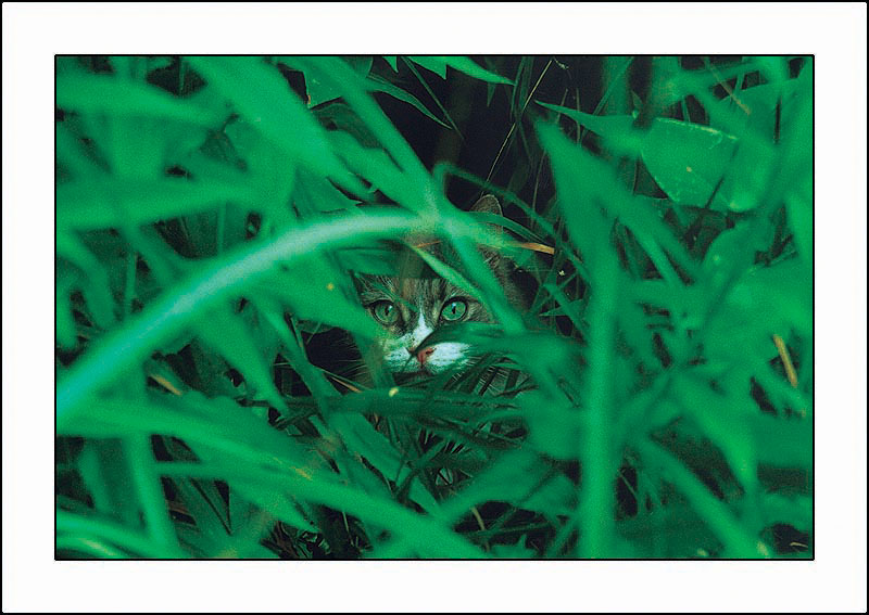 "photo ""In an ambush."" tags: nature, pets/farm animals"