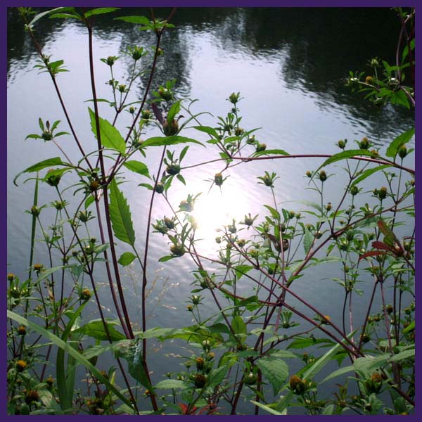 """photo """"some of the sun in cold water"""" tags: landscape, summer, water"""