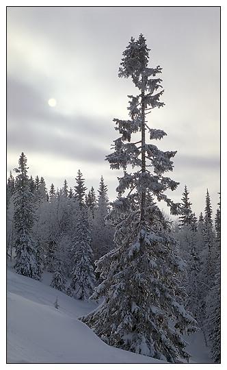 """фото """"***"""" метки: пейзаж, горы, зима"""