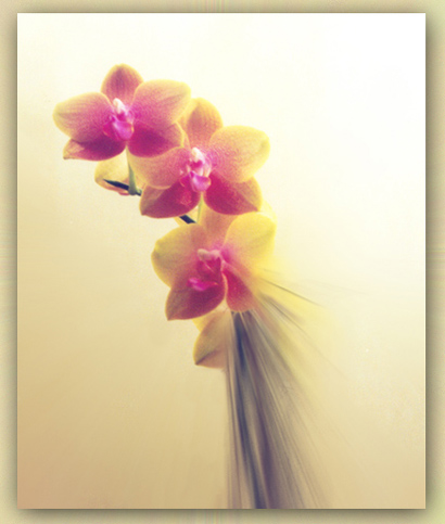 "photo ""Orchids"" tags: macro and close-up,"