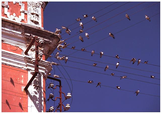 "фото ""Swallows, music paper-ruler"" метки: природа,"