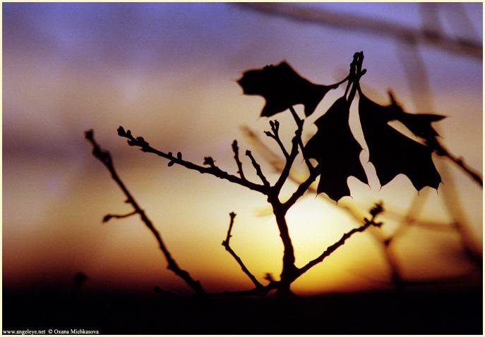 """фото """"Закат сквозь лес"""" метки: пейзаж, закат, осень"""