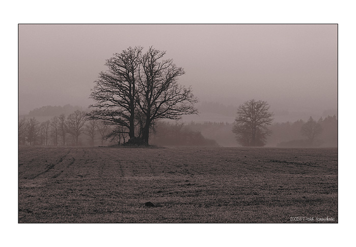 "photo ""A Foggy Day"" tags: landscape, clouds"