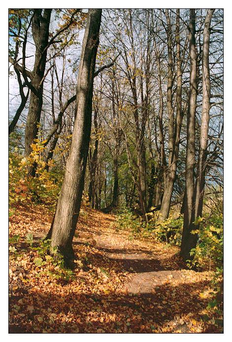 """фото """"Еще раз про осень..."""" метки: пейзаж, лес, осень"""