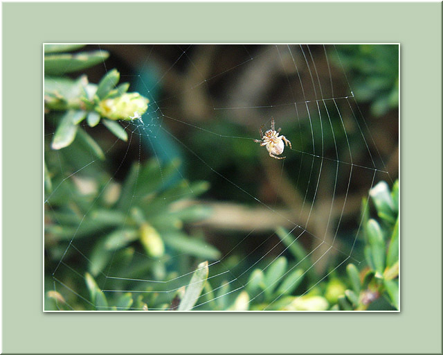 "photo ""WebMaster :)"" tags: macro and close-up, nature, insect"