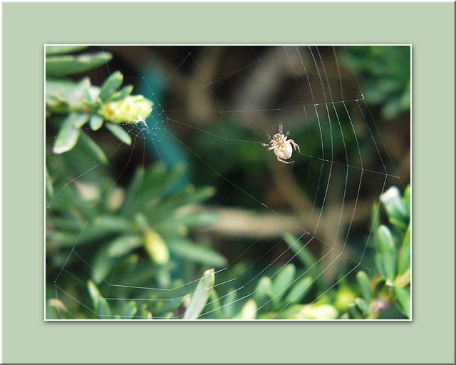 """фото """"Вебмастер :)"""" метки: макро и крупный план, природа, насекомое"""