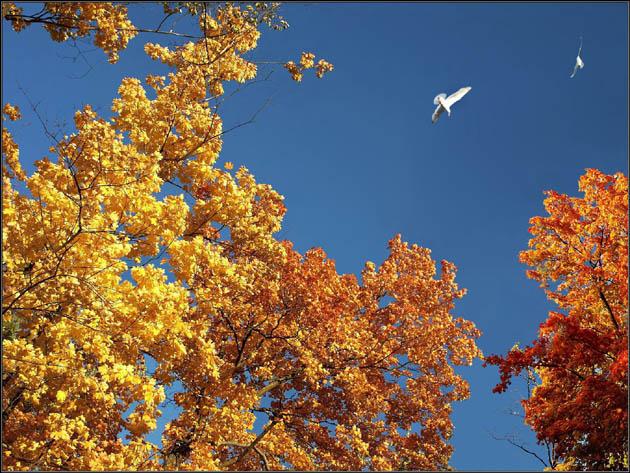 """фото """"*****"""" метки: пейзаж, осень"""